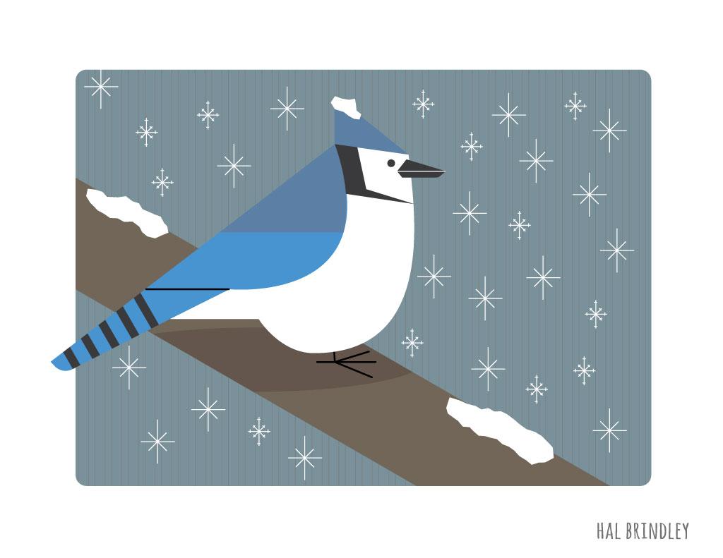 blue-jay-illustration