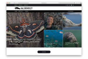 hal brindley web design