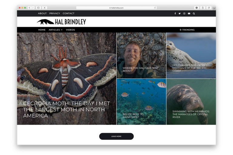 hal brindley web design
