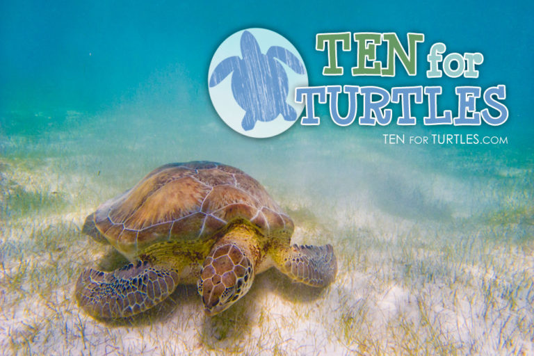 ten for turtles web design
